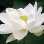 <b>Selections par Gangalakshmi 100</b>
