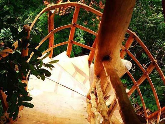 Photographer:avnet Inge | Tree House