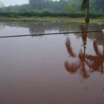 raining this morning