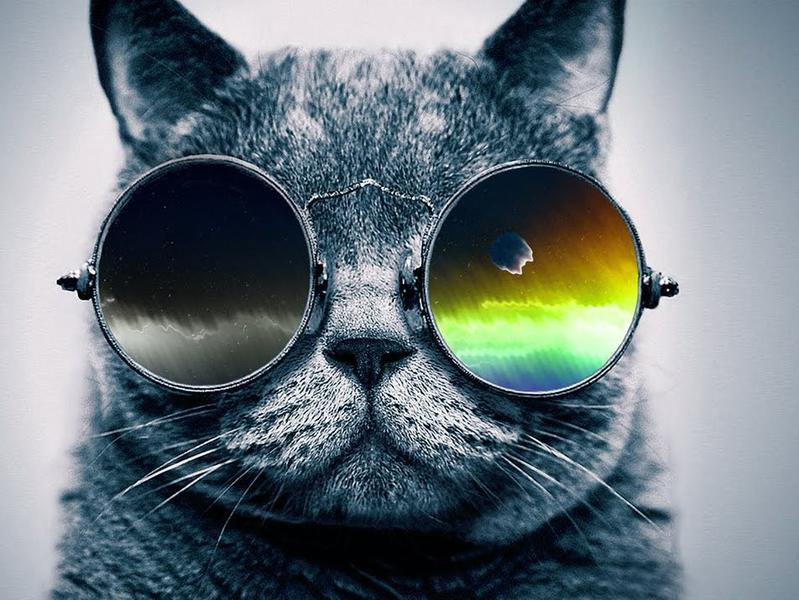 Photographer:web | cool cat