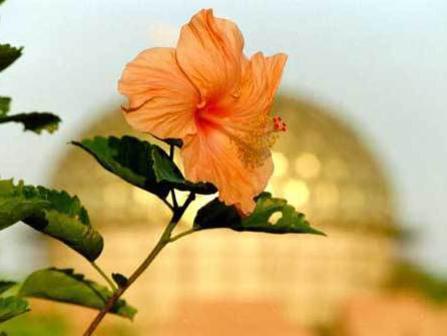 Photographer:web   City of God Temple, immortality