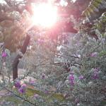 <b>CAT01, Arcosanti, Music</b>