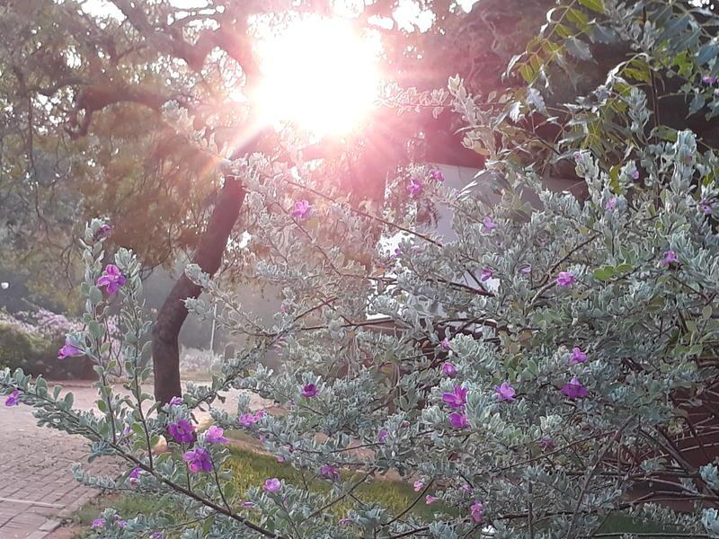 Photographer:Barbara   morning light
