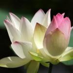 <b>Selections par Gangalakshmi 113</b>
