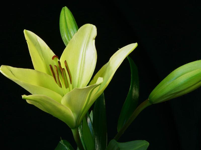 Photographer:web | green flower