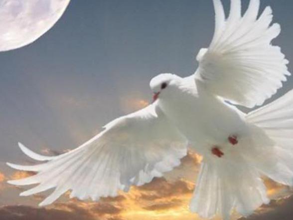 Photographer:web | white dove