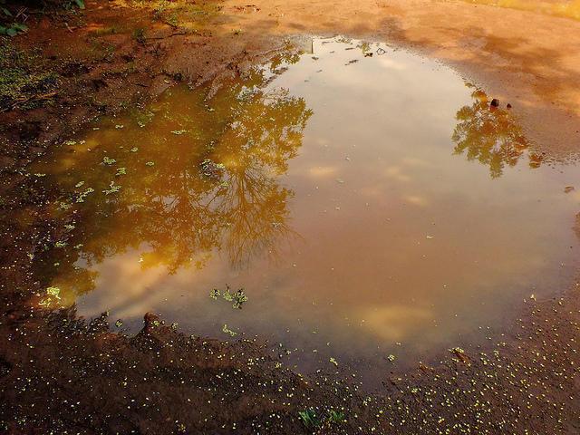 Photographer:Paulette | water