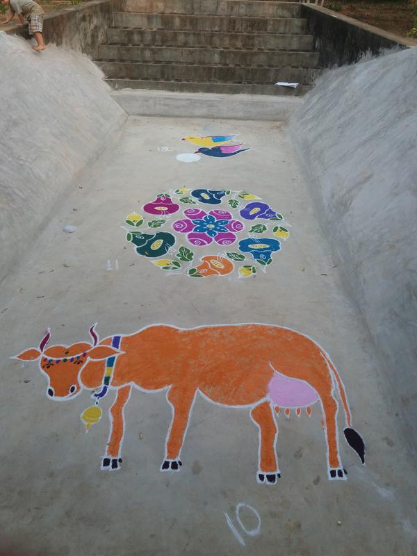 Photographer:David Dinakaran   A tradition of culture, a cow picture in kolam art