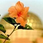 power of Spiritual Beauty of Auroville