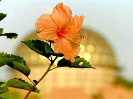 Photographer:web | power of Spiritual Beauty of Auroville