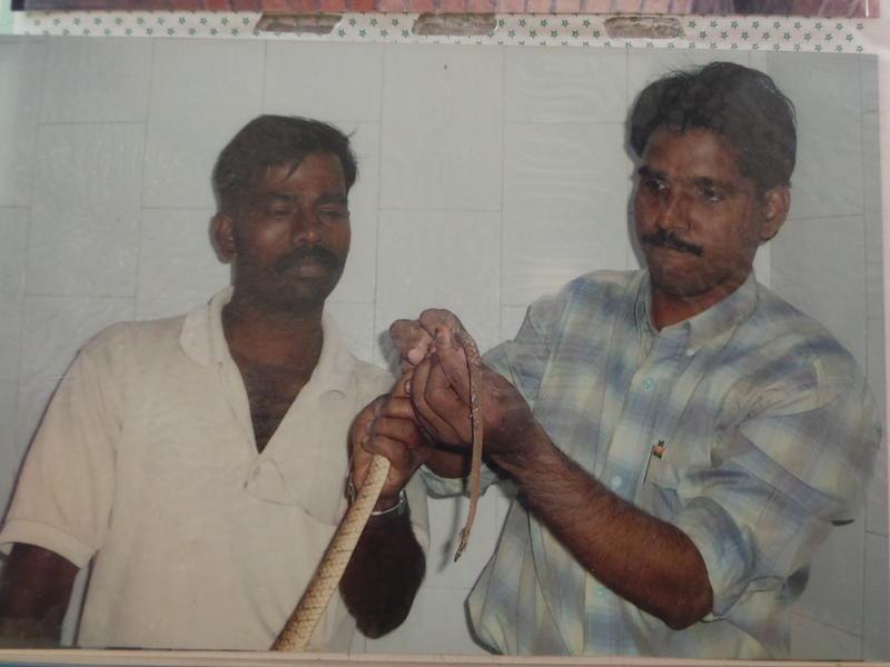 Photographer:Romel | Dr. Kumar traeting a snake from the bio-region