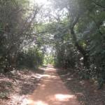 av forest