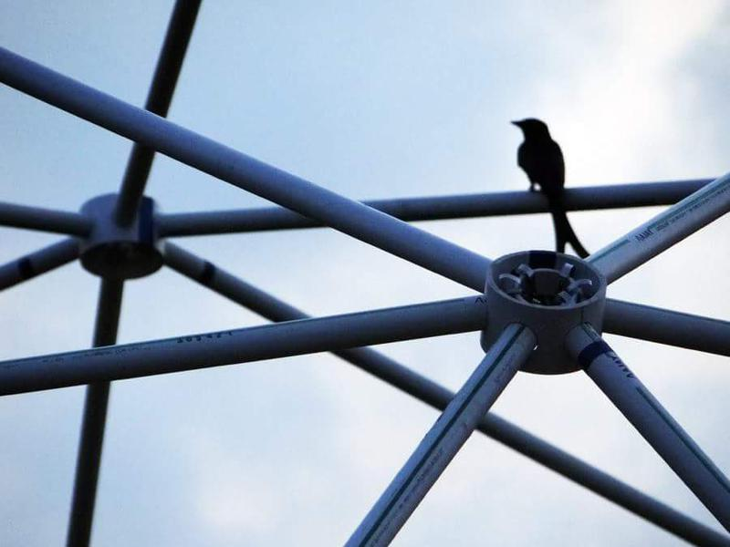 Photographer:EG Photography | Sweet drongo perched on the dome.
