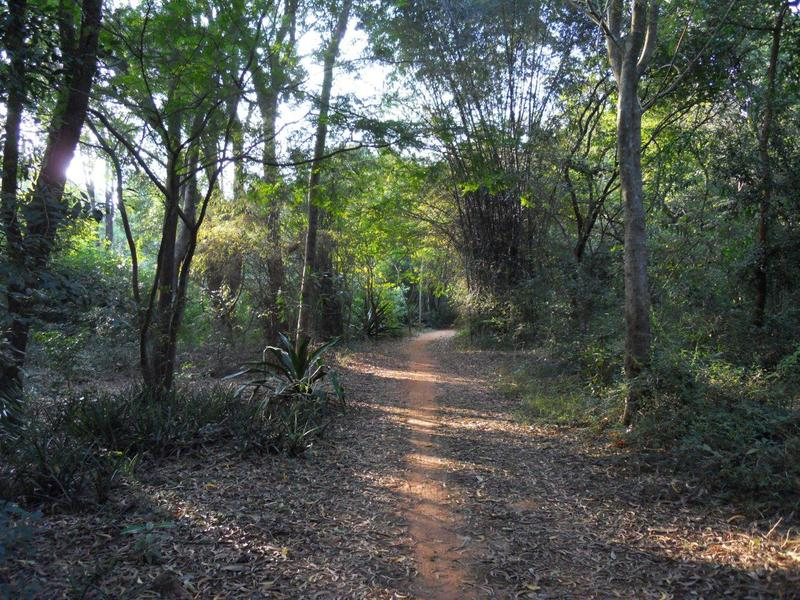 Photographer:. | Auroville's land today