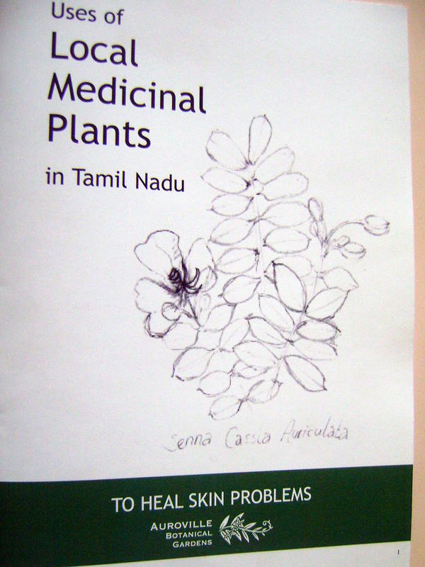 Photographer:Breda | Uses of Local Medicinal Plants in Tamil Nadu, to heal skin problems