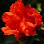 <b>Selections par Gangalakshmi 206</b>