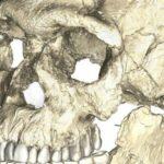 homo sapiens 300 000 old fossil