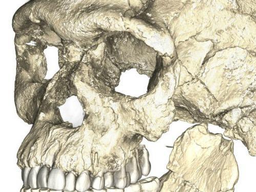 Photographer:web | homo sapiens 300 000 old fossil