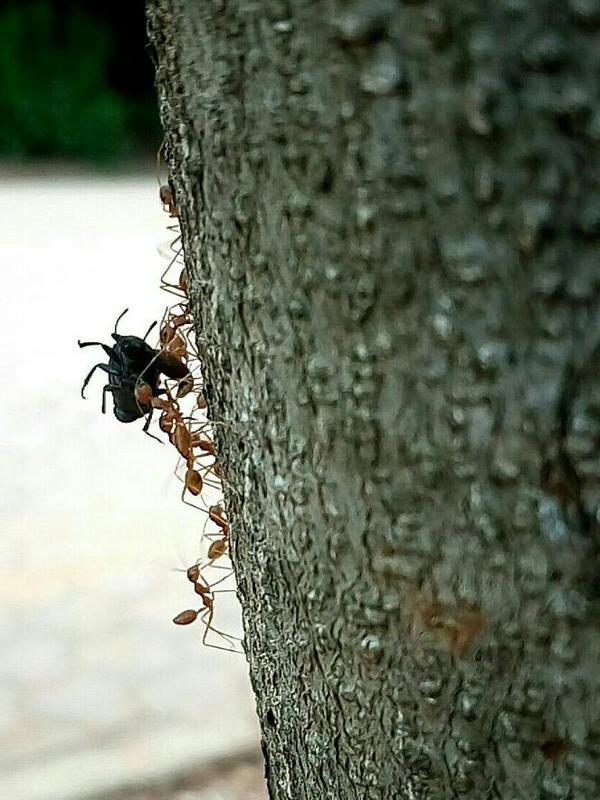 Photographer:Amelia | ants