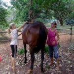 <b>Horses in Auroville</b>