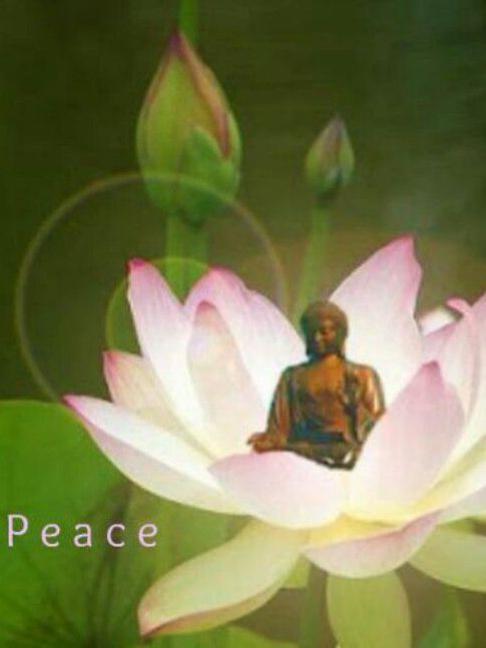 Photographer:web | peace