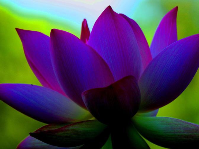 Photographer:web | inner peace