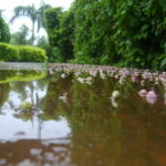 monsoon mud puddles and potholes