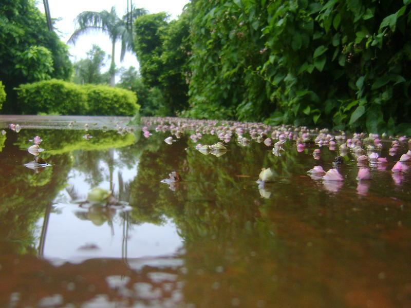 Photographer:Barbara | monsoon mud puddles and potholes