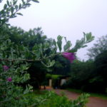 cloudy morning with drizzle