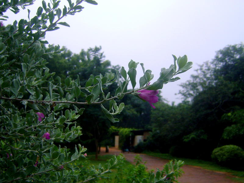Photographer:barbara | cloudy morning with drizzle