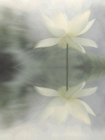 Photographer:web | Divine Love