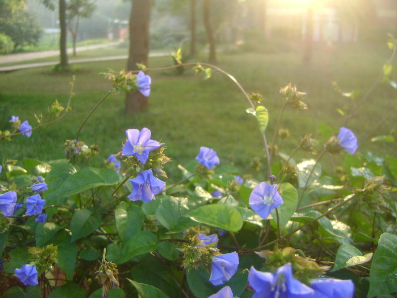 Photographer:Nela | sunny morning with hope