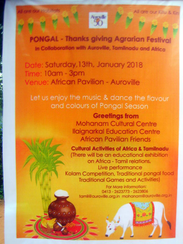 Photographer:web   Pongal at Africa House with Mohanam Cultural Centre, IEC,