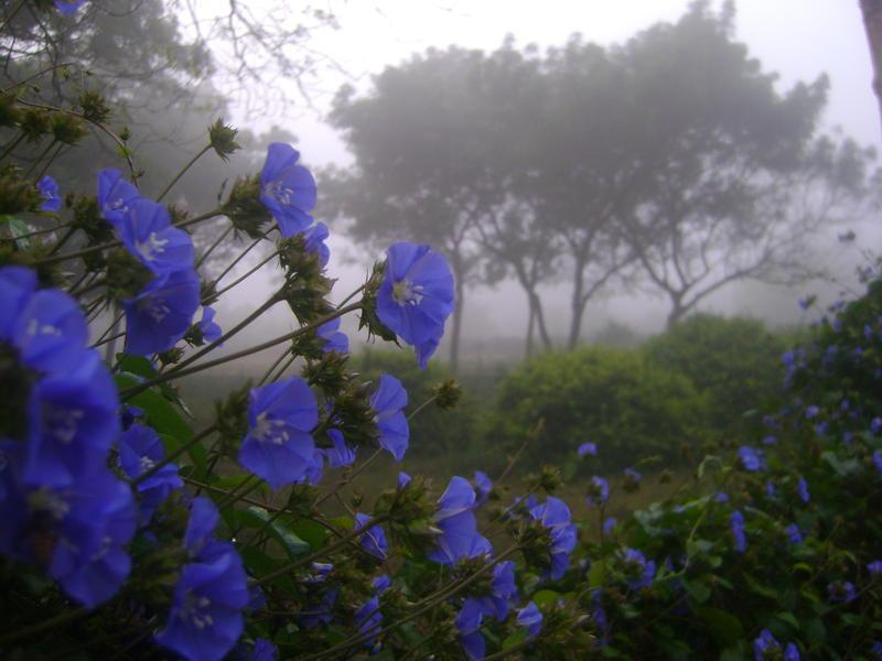Photographer:Yasna | foggy morning