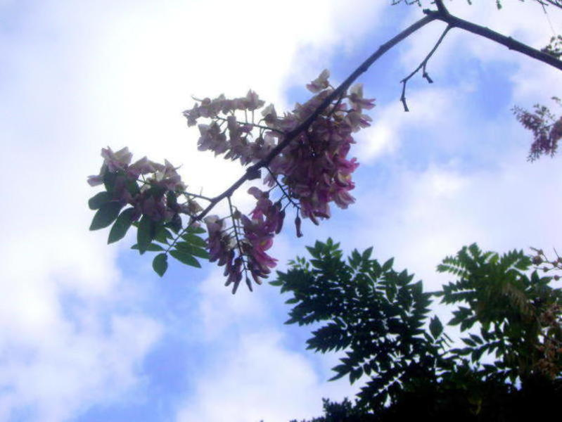 Photographer:Zinca | partly sunny day