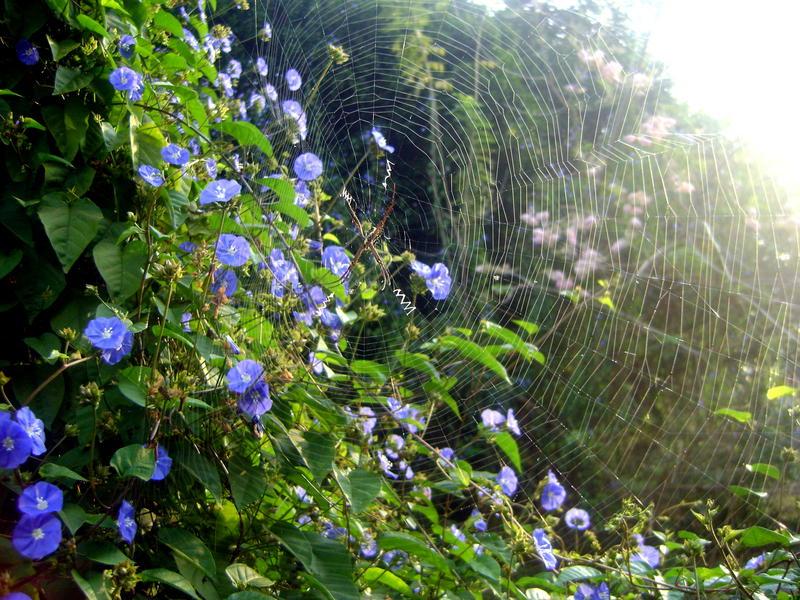 Photographer:Barbara | spider web with cross