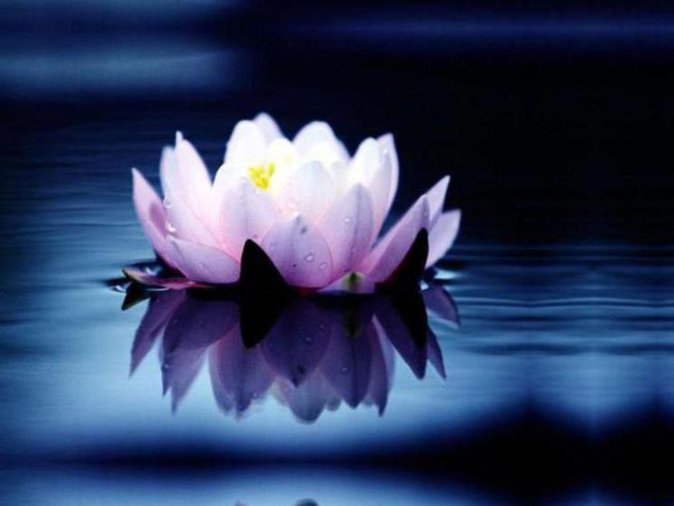 Photographer:web | meditative music