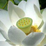 <b>Selections par Gangalakshmi 245</b>