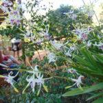 <b>Orchid Show at Auroville Botanical Gardens</b>