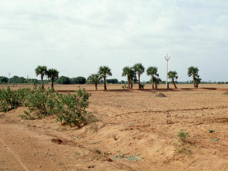 Photographer:Mauro   Il paesaggio era ancora molto arido in quei tempi (foto del 1979 circa)