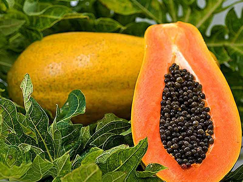 Photographer:web   papaya