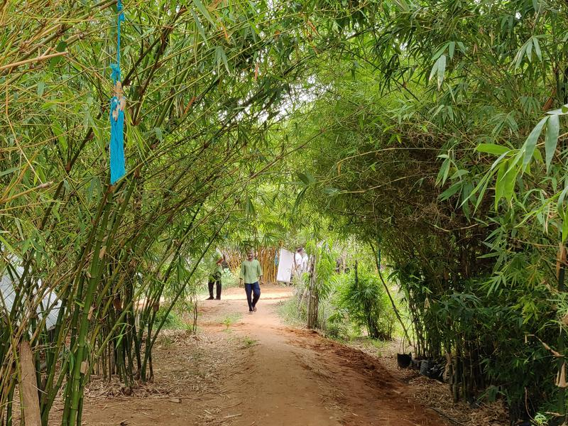 Photographer:Akshay | An archway leading us towards the newly planted saplings
