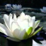 <b>Selections par Gangalakshmi 273</b>