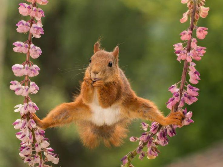 Photographer:Geert Wegernhel   juggling - The Comedy Wildlife Photography Awards