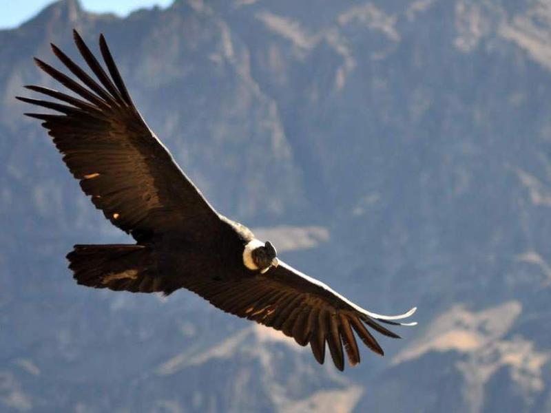 Photographer:Web | Condor