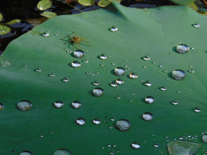 Photographer:Zarin   water droplets
