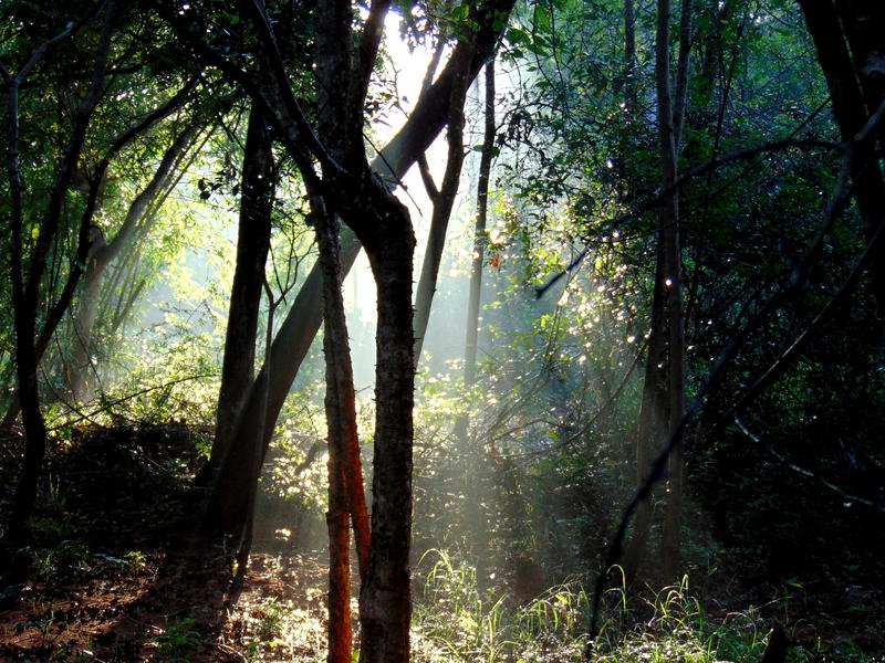 Photographer:web | evergreen semi dry tropical forest of Auroville