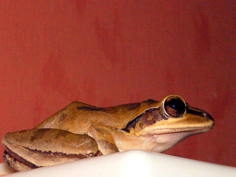 Photographer:web | frog