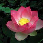 <b>Selections par Gangalakshmi 282</b>
