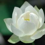<b>Selections par Gangalakshmi 288</b>